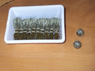 Teeblumen Adventskalender XXL mit einer Vielzahl von unterschiedlichen Teerosen und Teeblüten zum aufblühen, genießen & entspannen! Die ideale Geschenkidee oder einfach als Probier-Set - 6